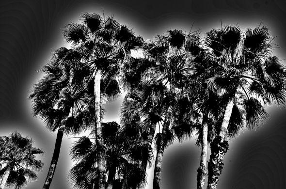 עצים שחור לבן