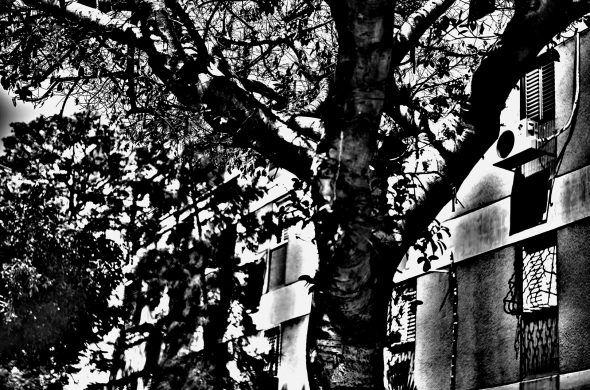 עץ שחור לבן
